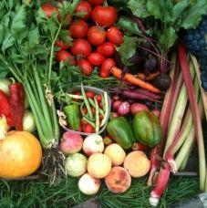 Our garden produce